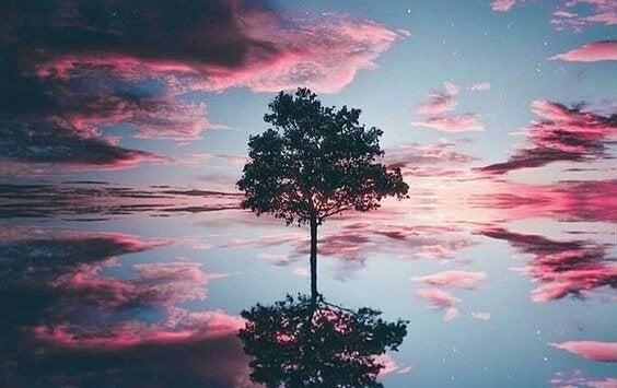 칼 코흐의 나무 실험: 내면의 감정과 성격을 파악하기