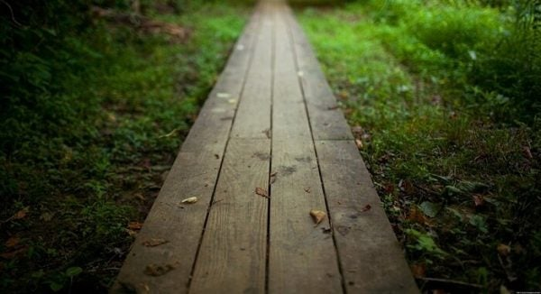 양치식물과 대나무: 회복력에 관한 이야기