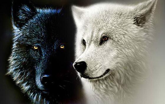 체로키 인디언의 전설: 두 늑대 이야기 그리고 내면의 힘