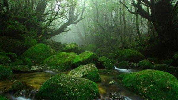 숲의 향기