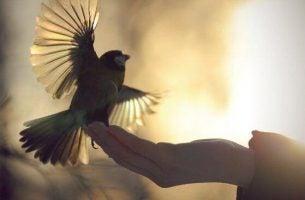 손위의 새