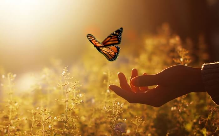 나비와 손