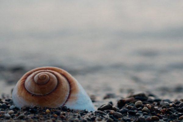 바다의 달팽이 이명