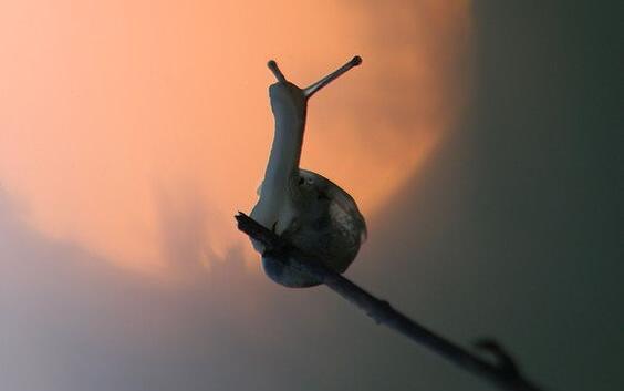 막대 위의 달팽이: 의지의 심리학