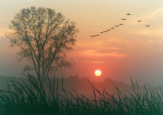 나무, 새, 태양