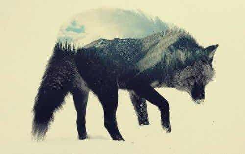 황야의 늑대: 성찰에 도움이 되는 헤르만 헤세의 책