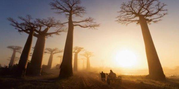 마음속의 바오밥 나무