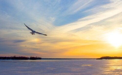 갈매기의 꿈: 스스로를 믿었던 갈매기, 조나단 리빙스턴
