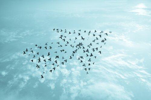 화살표를 그리는 새들