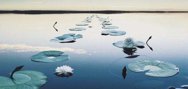 연꽃이 놓인 연못