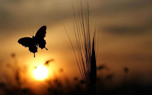 날아오르는 나비
