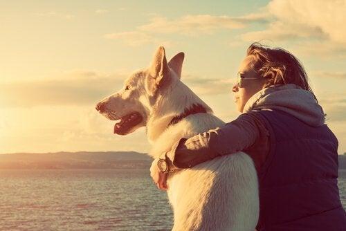 반려동물의 죽음으로 인한 슬픔을 극복하는 방법