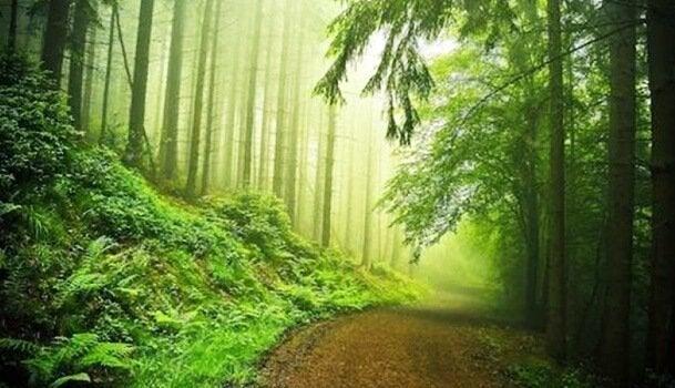 숲 테스트는 정신분석에서 어떤 위치에 있을까?