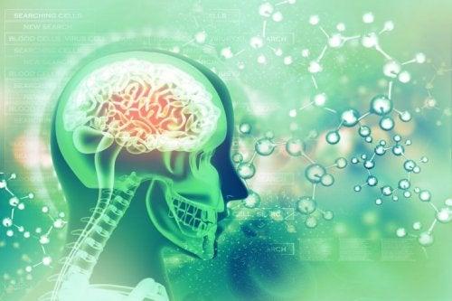 뇌 건강을 위한 엽산의 이점