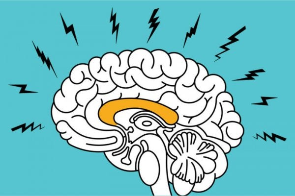 불안감이 뇌에 미치는 영향: 지침의 미로 02