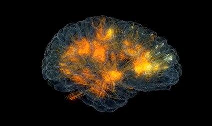 아인슈타인의 뇌량은 보통보다 두꺼웠다