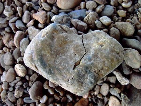 하트 모양의 돌