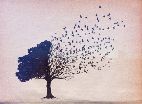 반쪽나무 감정적 테이커