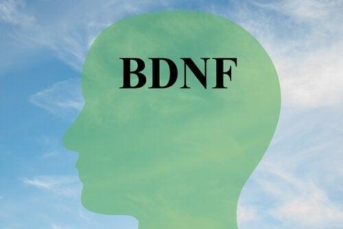건강한 뇌세포를 위해 BDNF 증가시키는 법