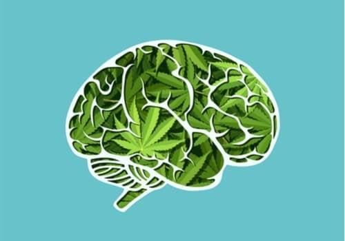 두뇌에 끼치는 대마초의 장기적 영향
