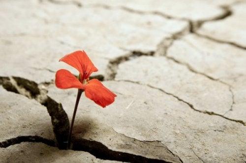 가뭄의 꽃