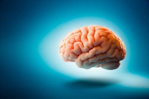 건강한 뇌