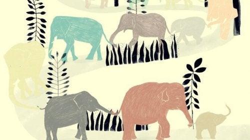 코끼리 무리