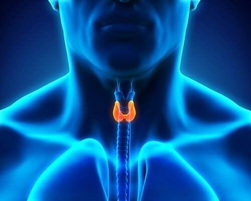 갑상선 기능 항진증 예방을 위하여 만성 스트레스를 피해야 한다