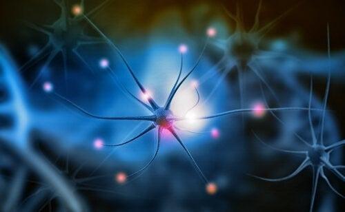 신경발생은 왜 중요한가?