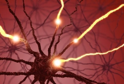 새로운 신경 세포의 생성은 해마의 일을 용이하게 해준다