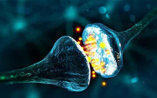 가바(GABA): 평온함과 긴장 이완의 신경전달물질