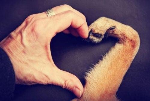 동물을 사랑하는 이유, 왜일까? 01