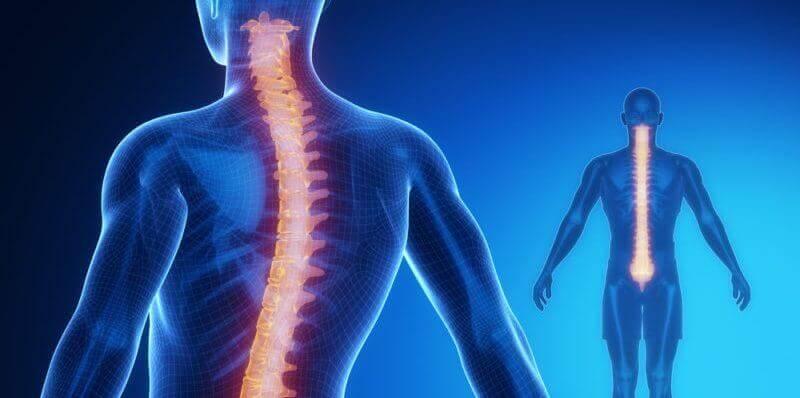 척수: 해부학과 생리학