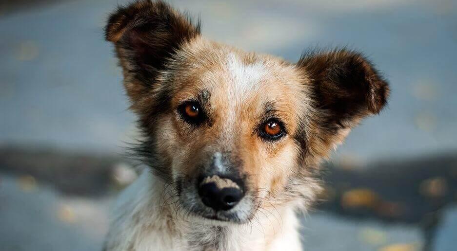 호기심 많은 강아지: 자기 반성에 관한 아름다운 이야기