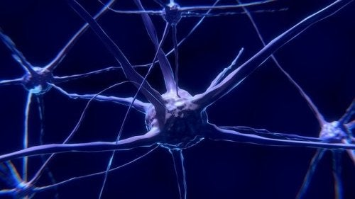 신경 세포: 무엇이고 어떻게 작동하는가?