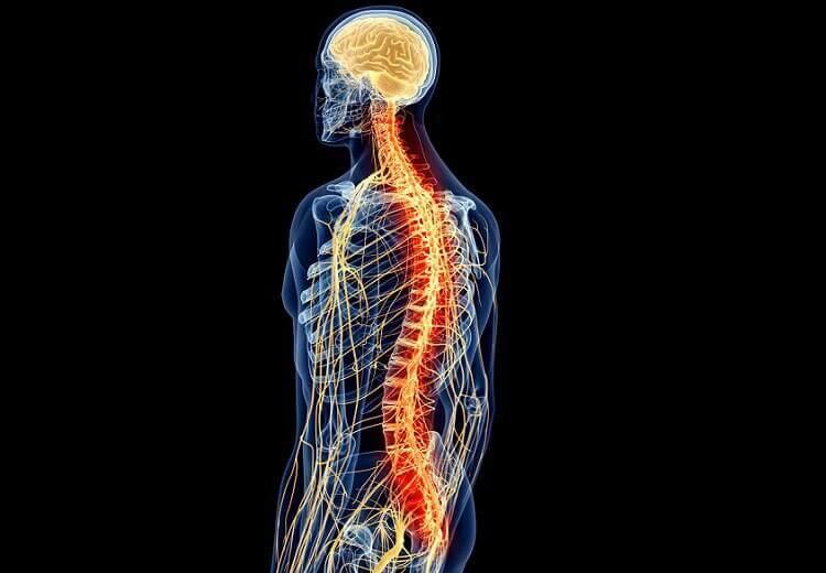 척수: 해부학과 생리학 01