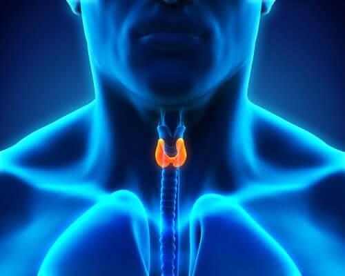기분에 관련된 호르몬 유형 6가지 01
