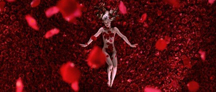 아메리칸 뷰티 장미