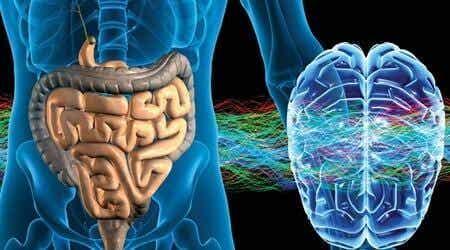 제 2의 뇌: 장신경계