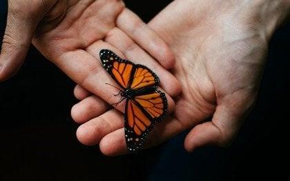 손과 나비