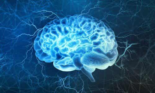 전두엽 피질은 뇌의 가장 흥미로운 부분 중 하나
