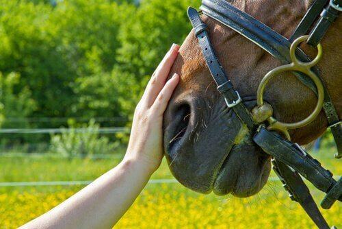 말 매개 치료의 6가지 이점 01