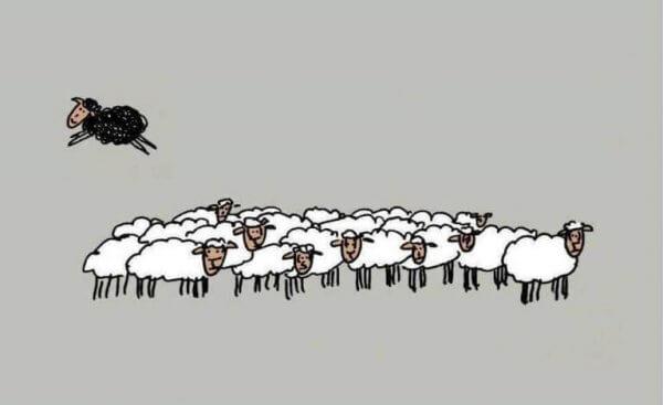 하얀 양떼에서 뛰쳐나가는 검은 양