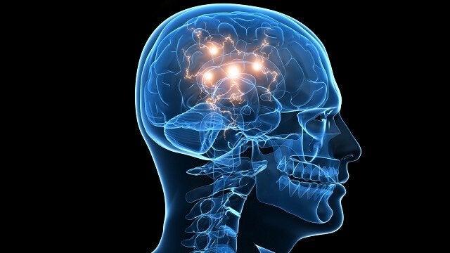 인간의 두뇌와 신경