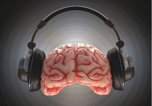 사운드트랙이 있는 뇌