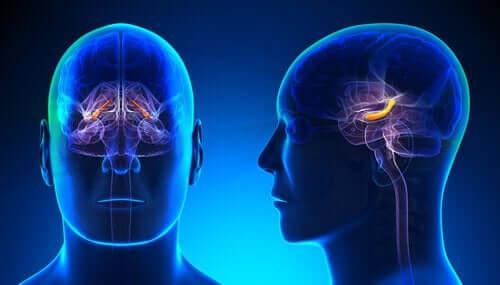 활성화 되는 해마와 뇌의 구조들