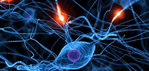 뇌혈관계 병리학의 손상을 감지하는 방법은 무엇일까?
