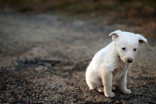 동물 자각: 슬픈 강아지