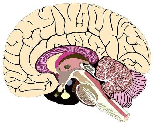 뇌척수막의 구조