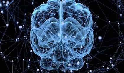 뇌도 잠을 자는가? - 수면 중 뇌에 나타나는 놀라운 변화